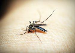 L'été arrive, et les moustiques aussi !